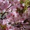 Весна в Ботаническом саду Петра Великого в Санкт-Петербурге