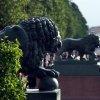 Сколько львов в Санкт-Петербурге?