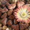 Бархатный сезон: список осенних выставок в Ботаническом саду