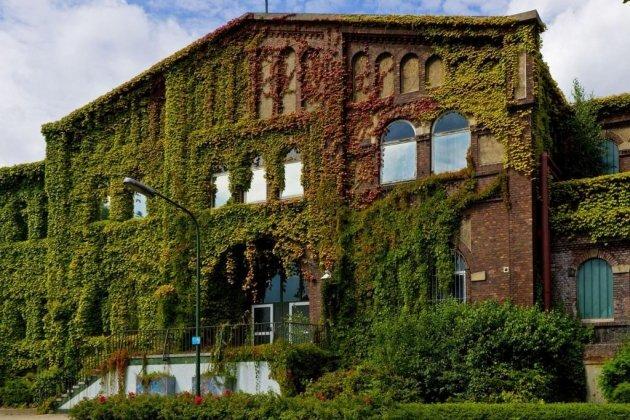 Озеленение дворовой территории многоэтажного дома нормы