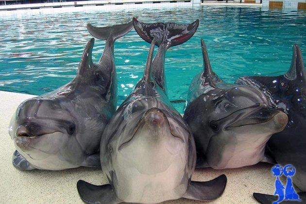 Утришский дельфинарий в Питере