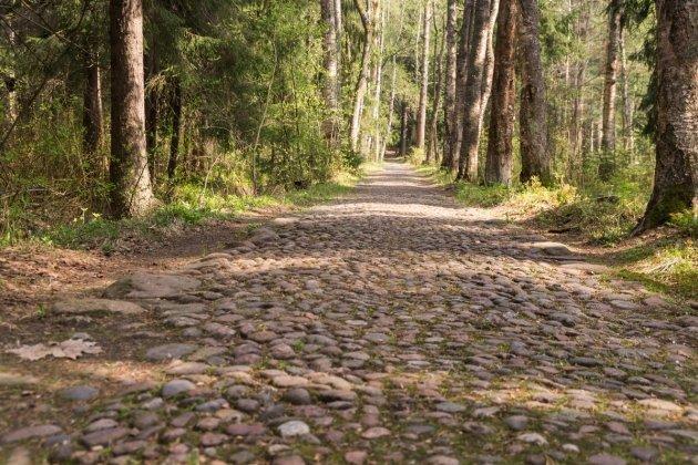 Центральный парк Репино
