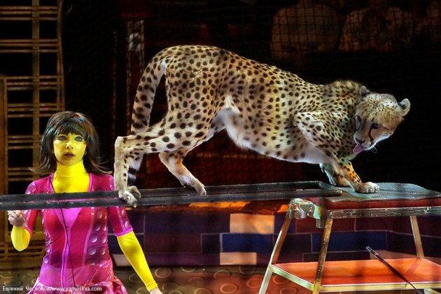 Цирковое представление «Королевство Гепардов»