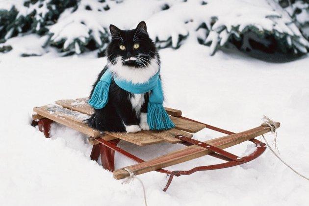Картинки по запросу сани зима