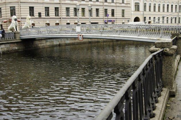 Львы на львином мосту в Санкт Петербурге