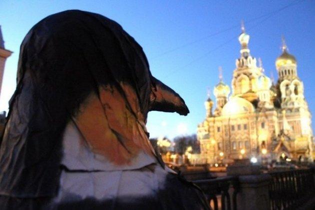 Пингвин на льдине появился в Канале Крибоедова в Петербурге