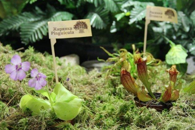 Выставка-продажа «Хищные растения»