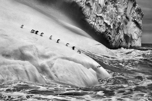 Выставка фотографий Себастио Сальгадо из проекта «Генезис»