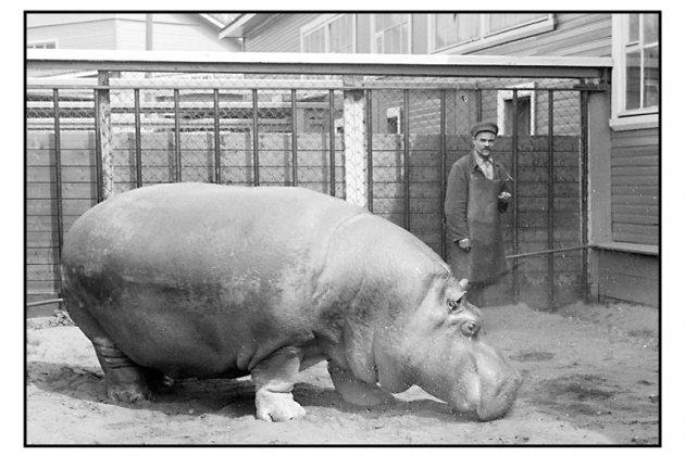 Выставка «В зоопарке у зверей…»