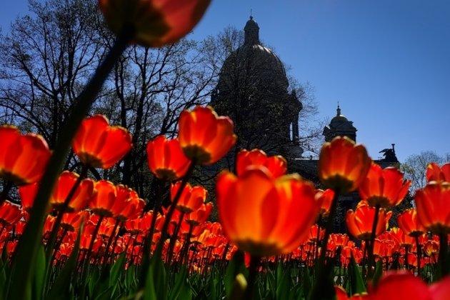 Восемь миллионов цветов украсят Северную столицу весной