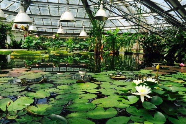 В Ботаническом саду открыли водный маршрут