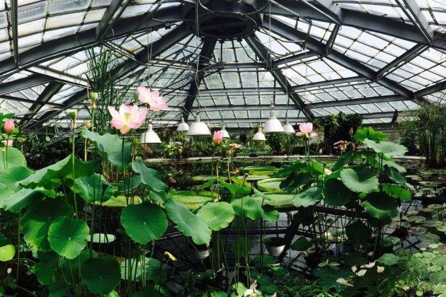 В Ботаническом саду открыт для посещения водный марршрут