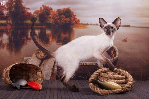 ежегодная выставка кошек редких пород в ТРЦ «Питерлэнд»