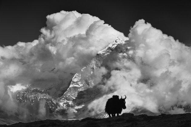 Выставка Александра Дымникова «Свет Тибета»